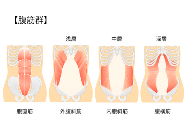 「腹直筋」「外腹斜筋」「内腹斜筋」「腹横筋」の文字と解剖図