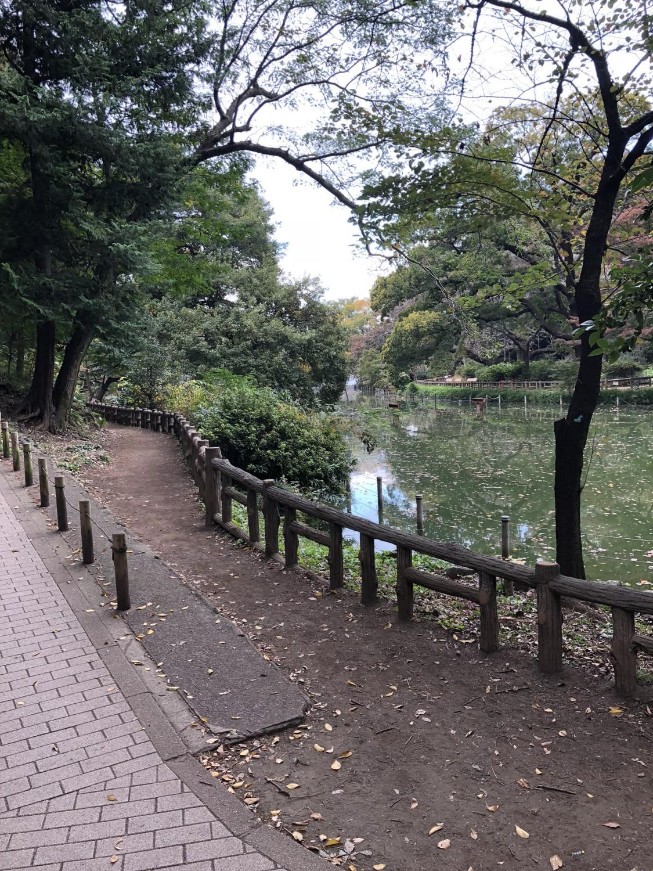 道の右側に井の頭池