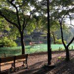 ベンチと木々 右側から太陽の光がさしている