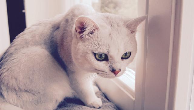 背中を丸くする猫